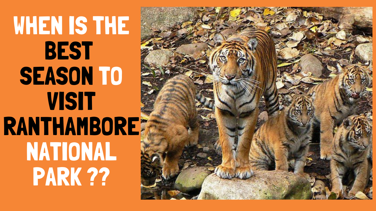 Best Time To Visit Ranthambore
