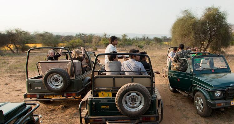 Jeep Safaris At Sariska