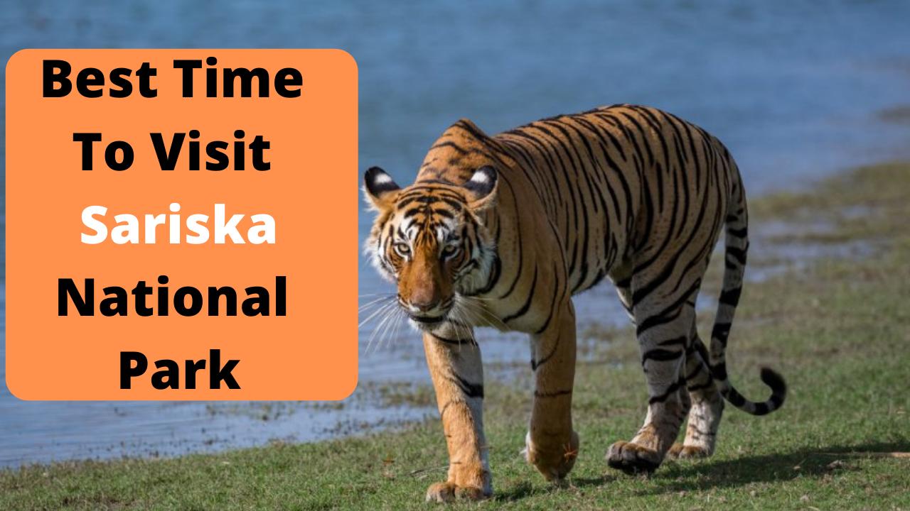 Best Time To Visit Sariska National Park