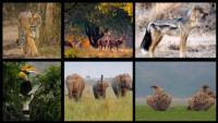 Flora And Fauna Of Jim Corbett National Park