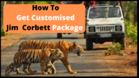 How To Get Customised Jim Corbett Packages