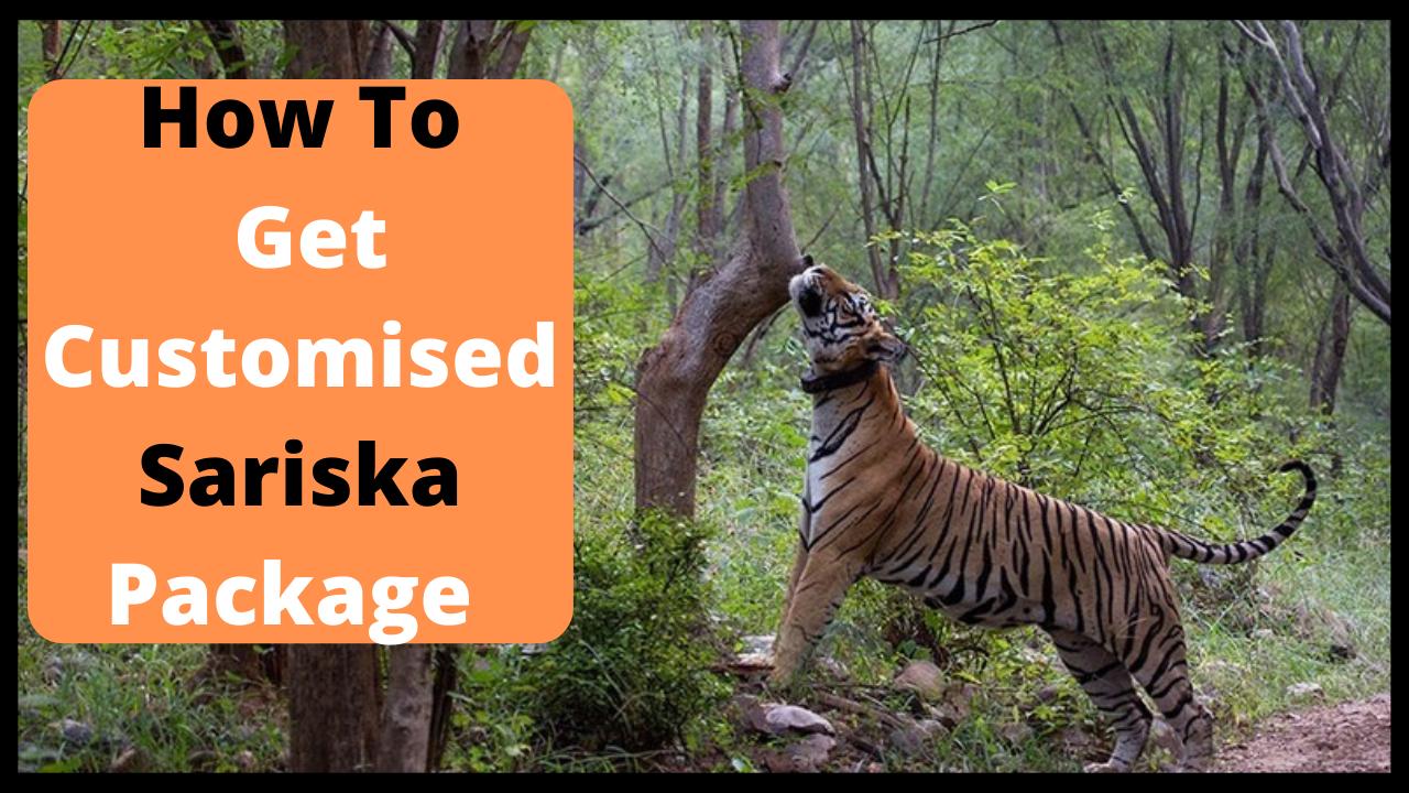 How to Get Customised Sariska Package