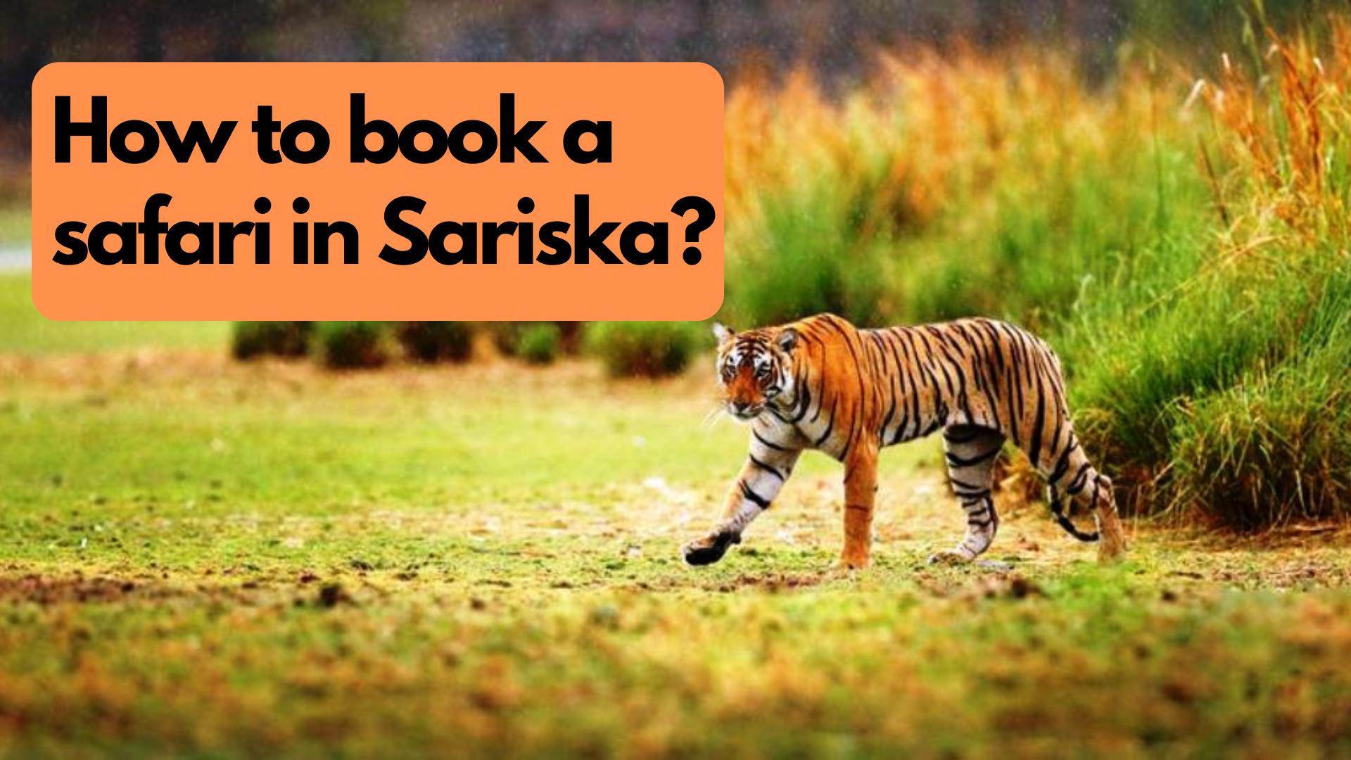 How to book a safari in Sariska?