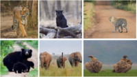Fauna At Indian National Parks
