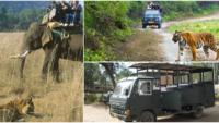 Safaris At Indian National Parks