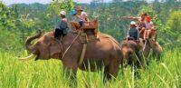 Elephant Safari At Jim Corbett National Park