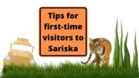 Tips For First time visitors to sariska