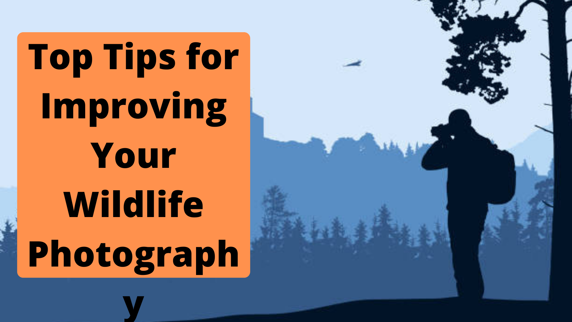 Top Tips for Improving Your Wildlife Photography