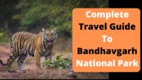 Travel Guide To Bandhavgarh National Park
