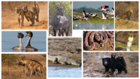 Animals In Ranthambore National Park