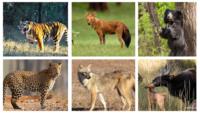 Animals At Kanha National Park