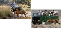 Safaris At Ranthambore