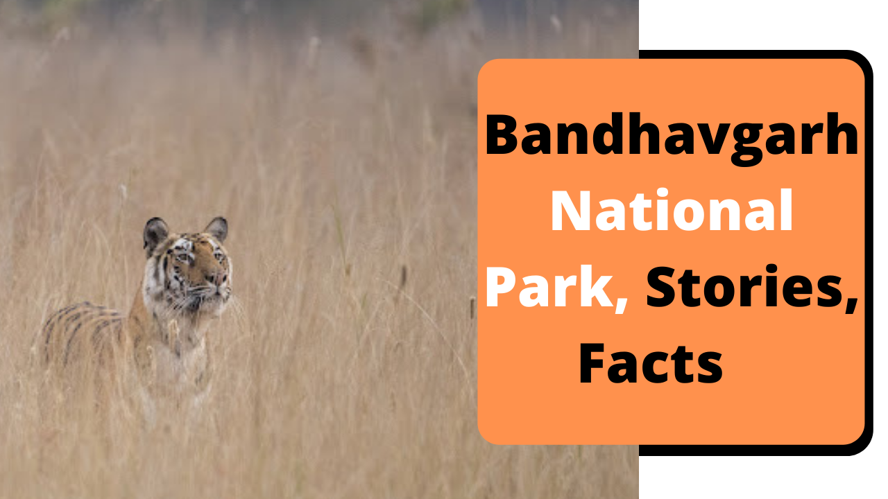 Bandhavgarh National Park Stories