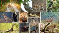 Flora And Fauna Of Kanha National Park