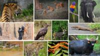 Animals And Birds In Nagarhole