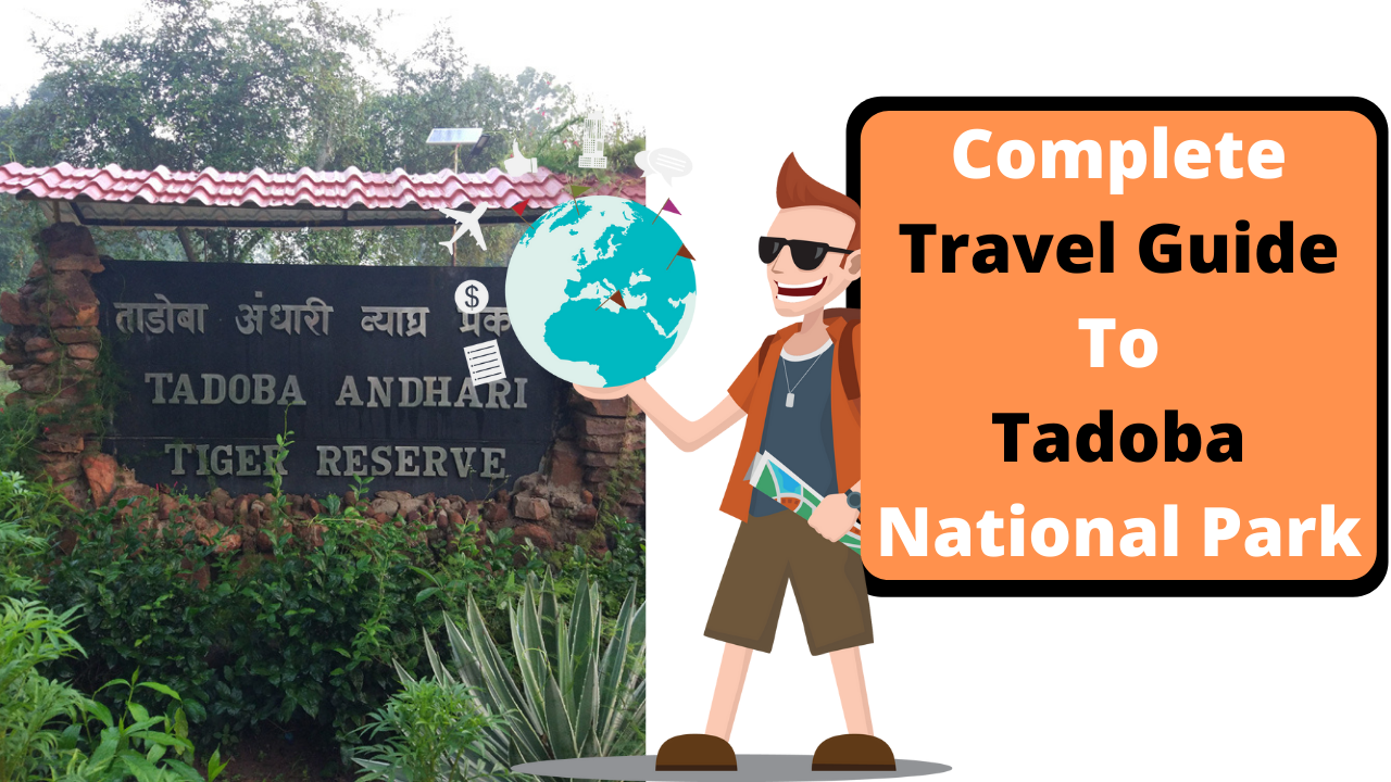 Complete Travel Guide To Tadoba National Park