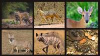 Flora-And-Fauna-At-Bandhavgarh-National-Park