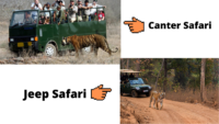 Safaris At Tadoba