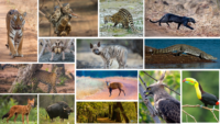 flora and fauna at Tadoba National Park