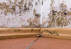 Black Mold in Basement | Hunterdon County, NJ | A-1 Basement Solutions