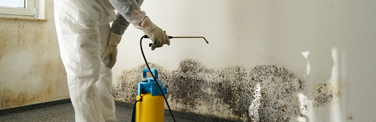 Black Mold In Basement | Sussex County, NJ | A-1 Basement Solutions