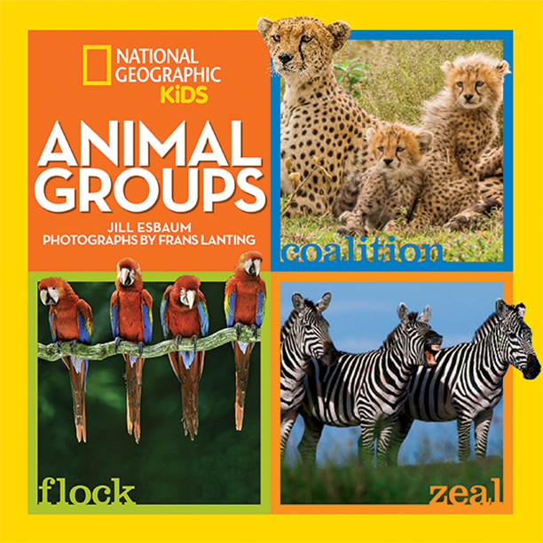 Animal Groups_Cover