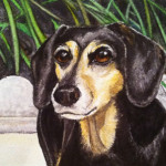 Heather Torres Art | Doxie | watercolor painting of dog, Dachshund pet portrait