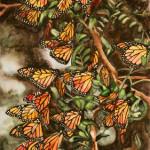 Heather Torres Art |Butterflies |watercolor painting of monarch butterflies