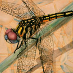 Heather Torres Art | Dragonfly | watercolor painting of dragonfly with geometric background