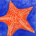 Heather Torres Art | Orange Starfish | watercolor painting of orange and blue starfish