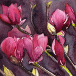 Heather Torres Art |Winter Magnolia | watercolor painting of pink Japanese magnolia flowers