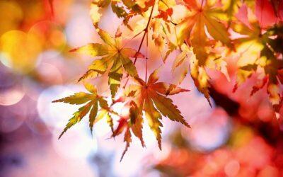 Fall New Arrivals Sneak Peak!