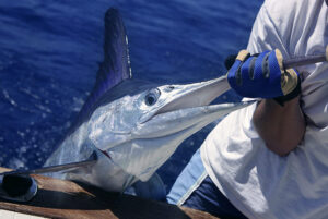 Explore Ocean City fishing and boating