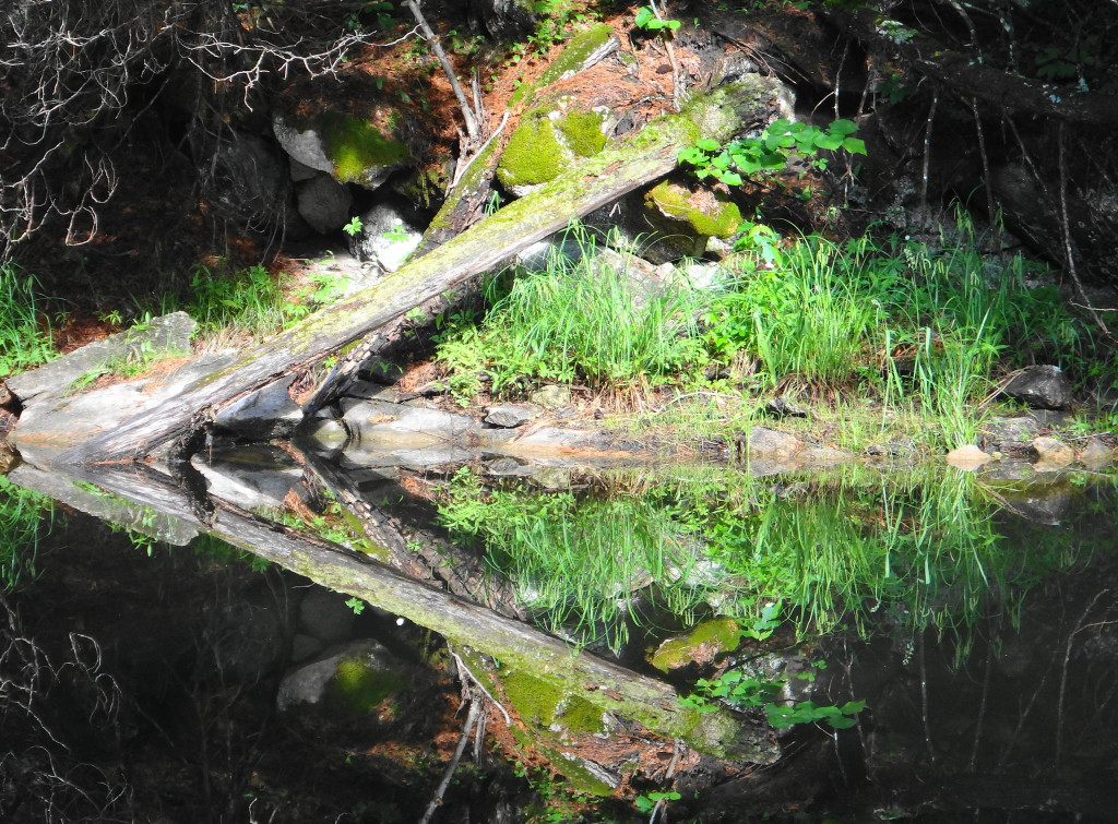 A patch of sunlit shoreline reflects in the still dark water of a creek.