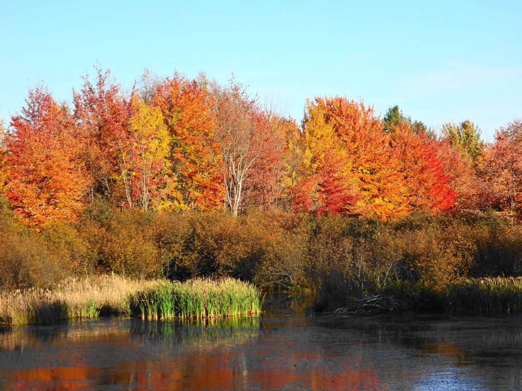 Carp Hills Foliage