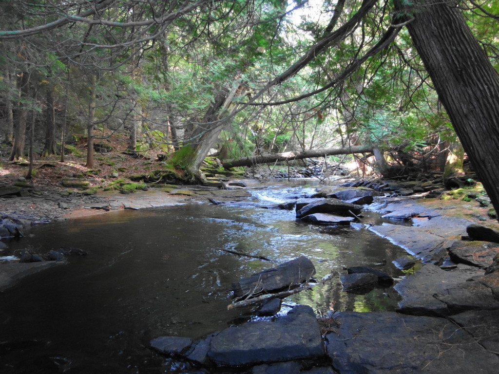 A shallow stream runs under leaning cedars trees in a stony channel.