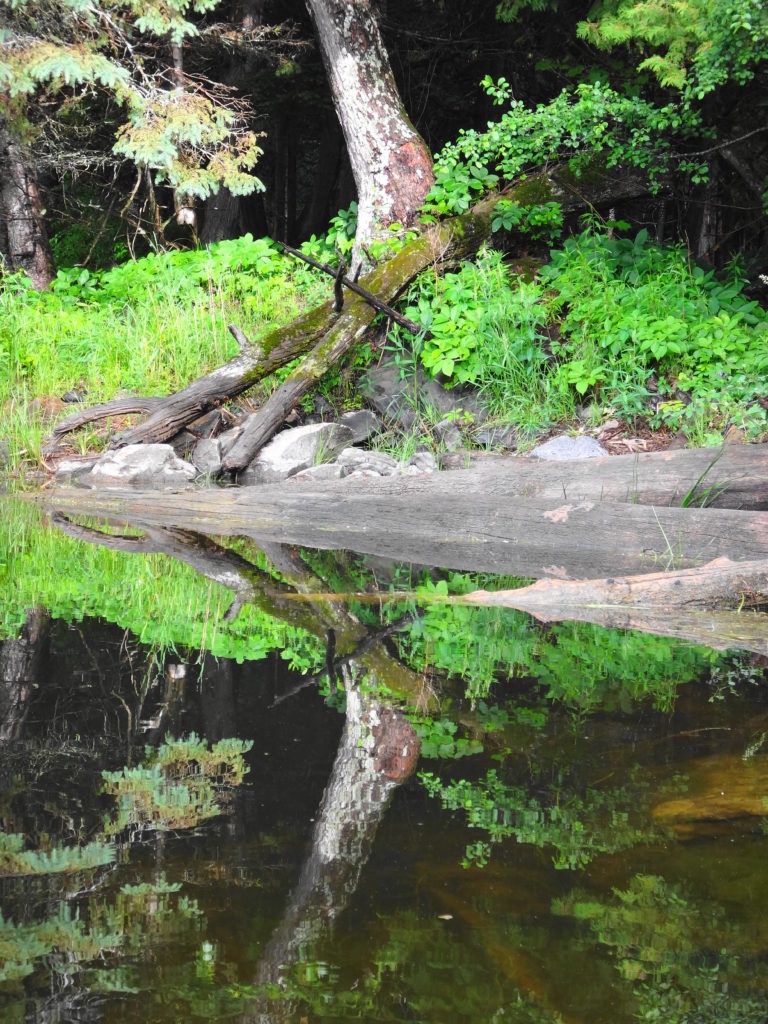 A log, ferns and rocky shoreline reflect in the water of the Snye River.