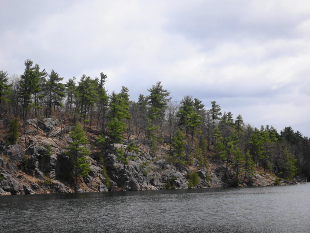 A tree-clad cliff rises from the water of Pink Lake.