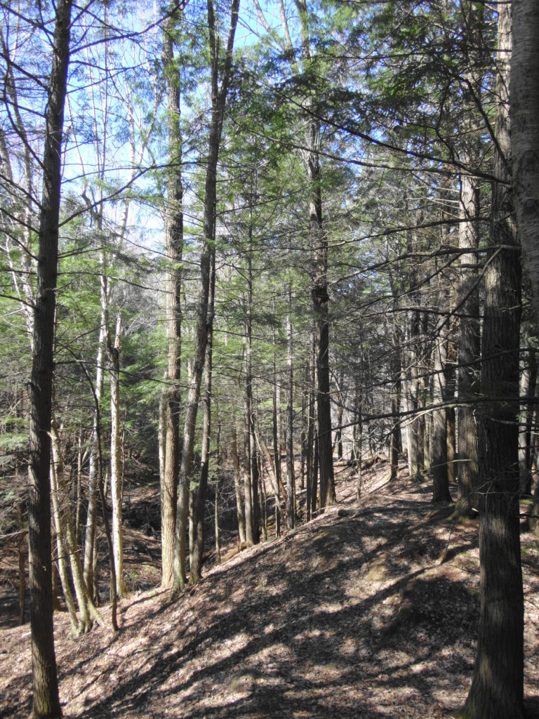 A narrow, nature trail runs along the ravine slope.