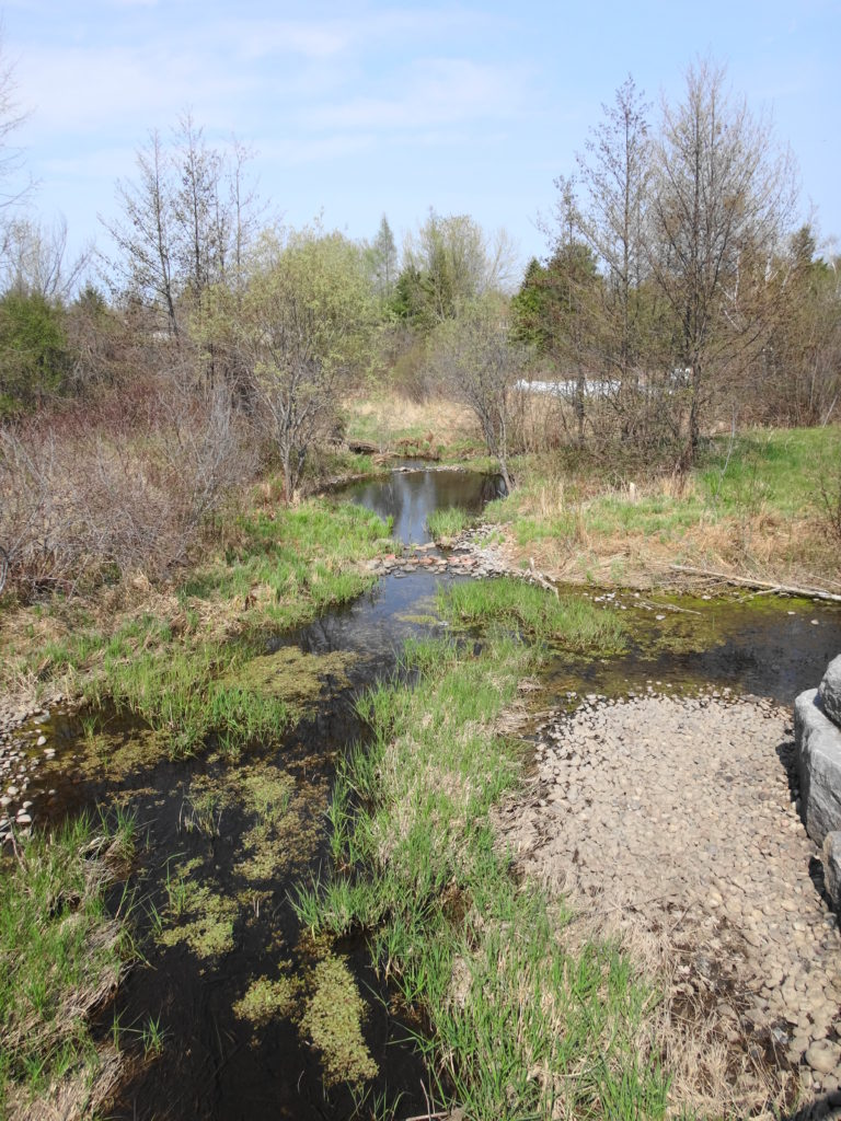 A small creek runs through an open, grassy channel, with several deeper pools.