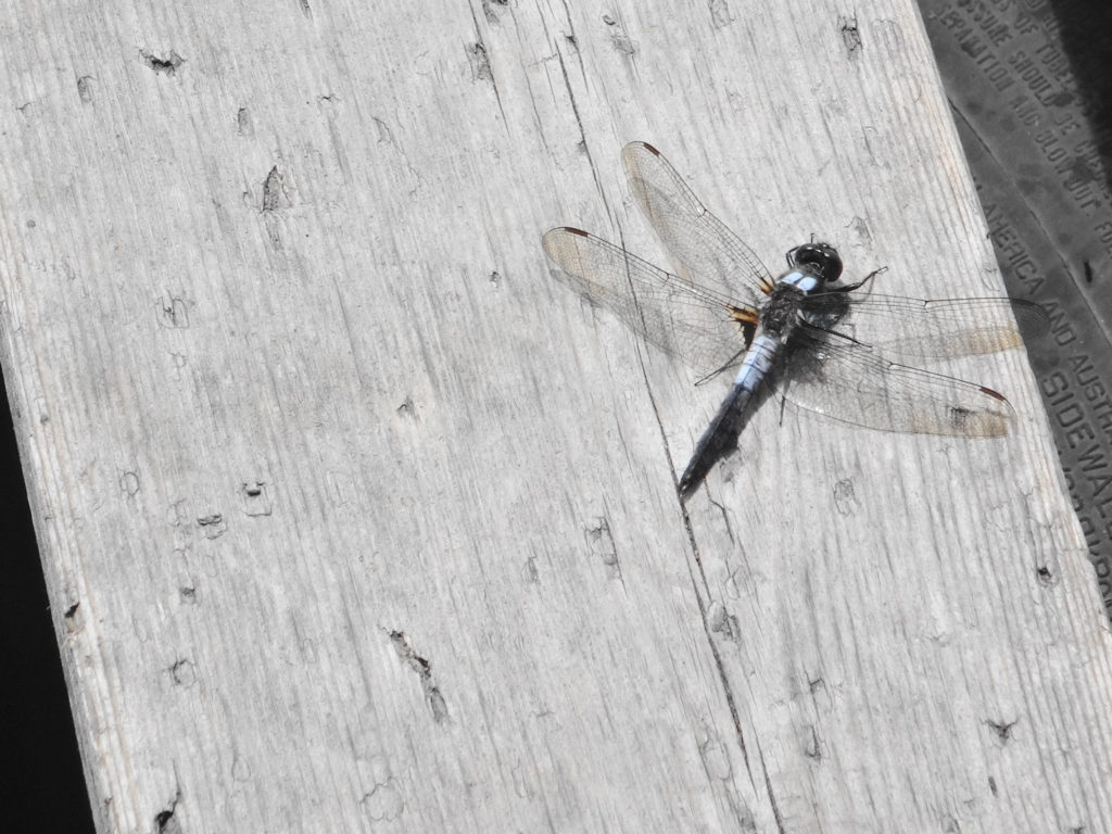 A chalk-fronted corporal sits on a board in Deep River