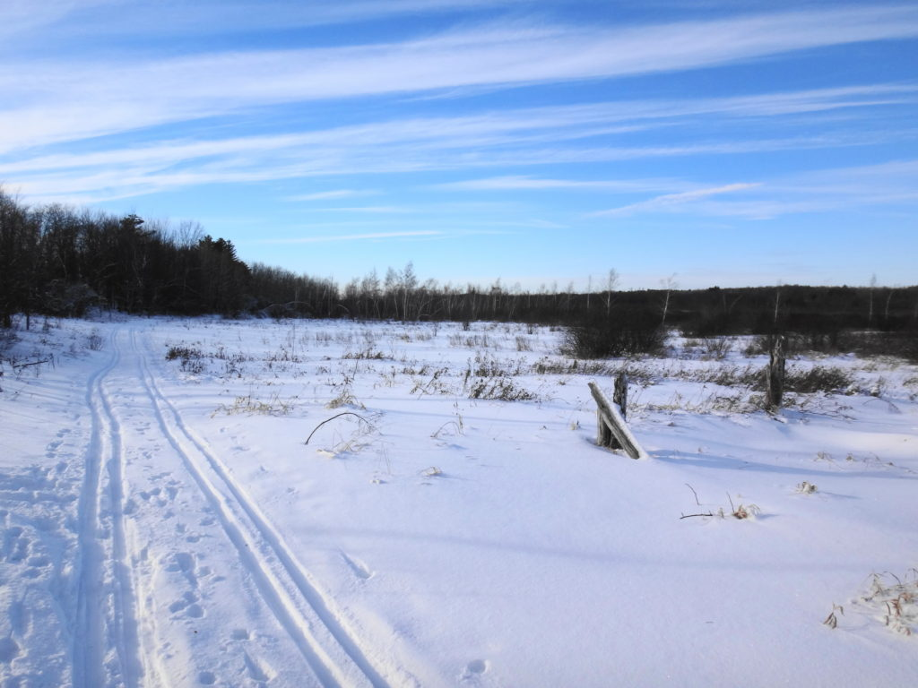 Parallel cross-country ski tracks skirt the edge of a thicket swamp at Mer Bleue.