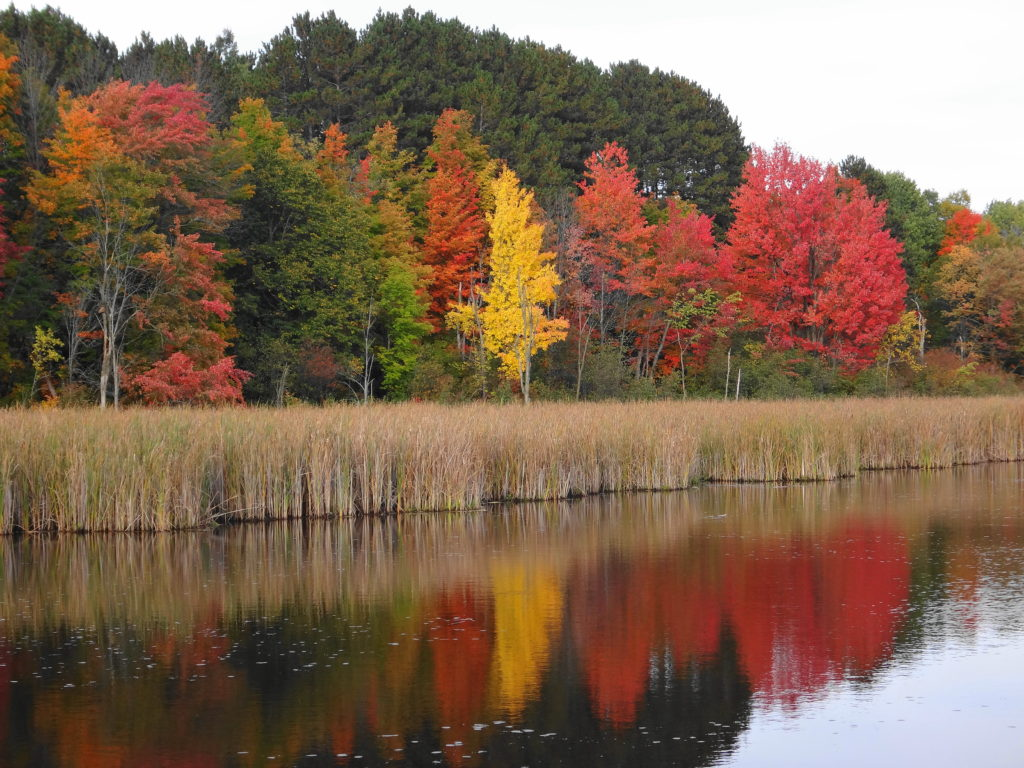 Red and gold trees reflect in the pond beside the Mer Bleue Boardwalk