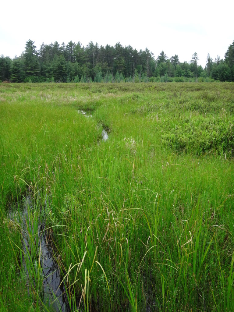 A narrow stream runs through a sedge meadow, fed by the raised bog in the background.
