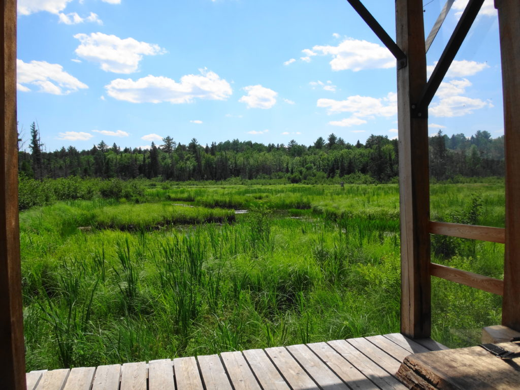Looking out from the shade of a covered observation shelter, a verdant marsh offers a pleasing view.