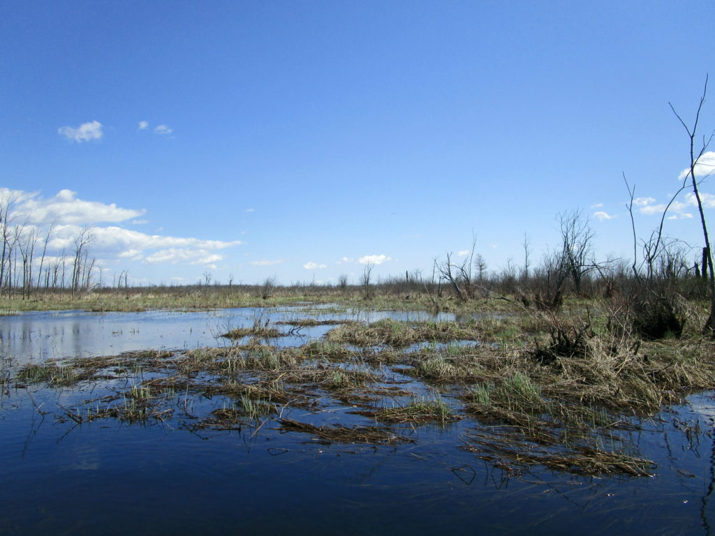 Brown grasses and sedges cover a partially flooded peatland in the Richmond Fen.