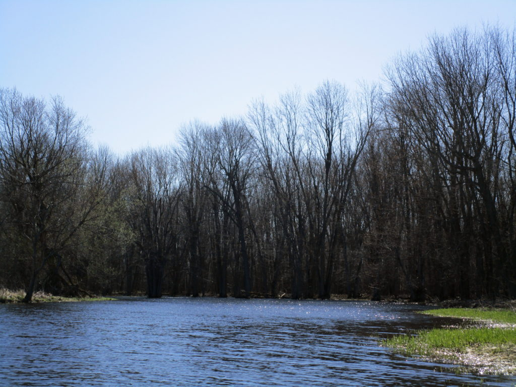 Looking downstream, the river channel curves into a dark band of bare trees.