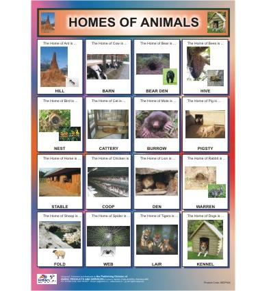 animals and their homes chart educational