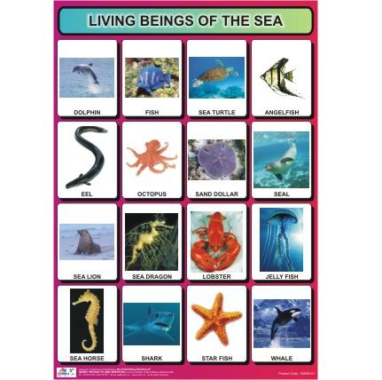 Sea animals chart with pictures