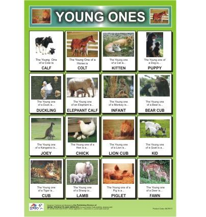 animals and their young ones chart